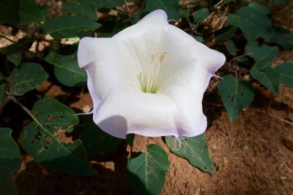 flore de Zion NP