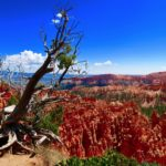 rim trail bryce canyon