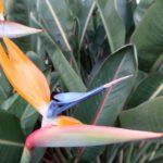 Flore Balboa Park