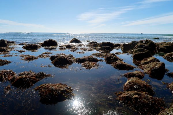 Point Loma Tide Pools