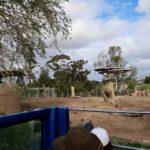 Bus Tour zoo San Diego