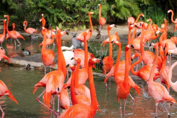 animaux Zoo San Diego