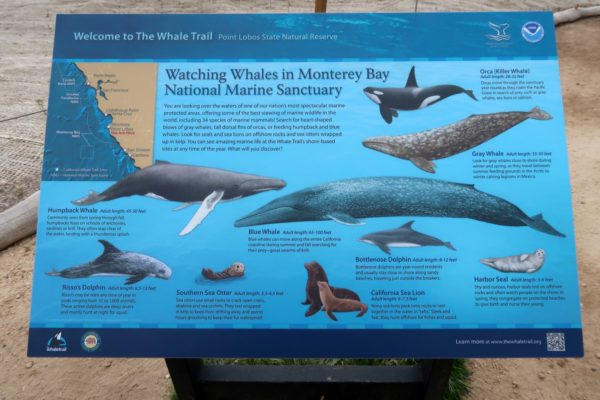 espèces animales Point Lobos