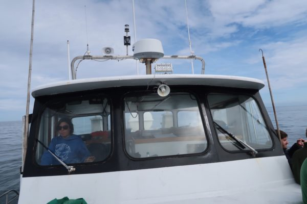 croisière observation baleines