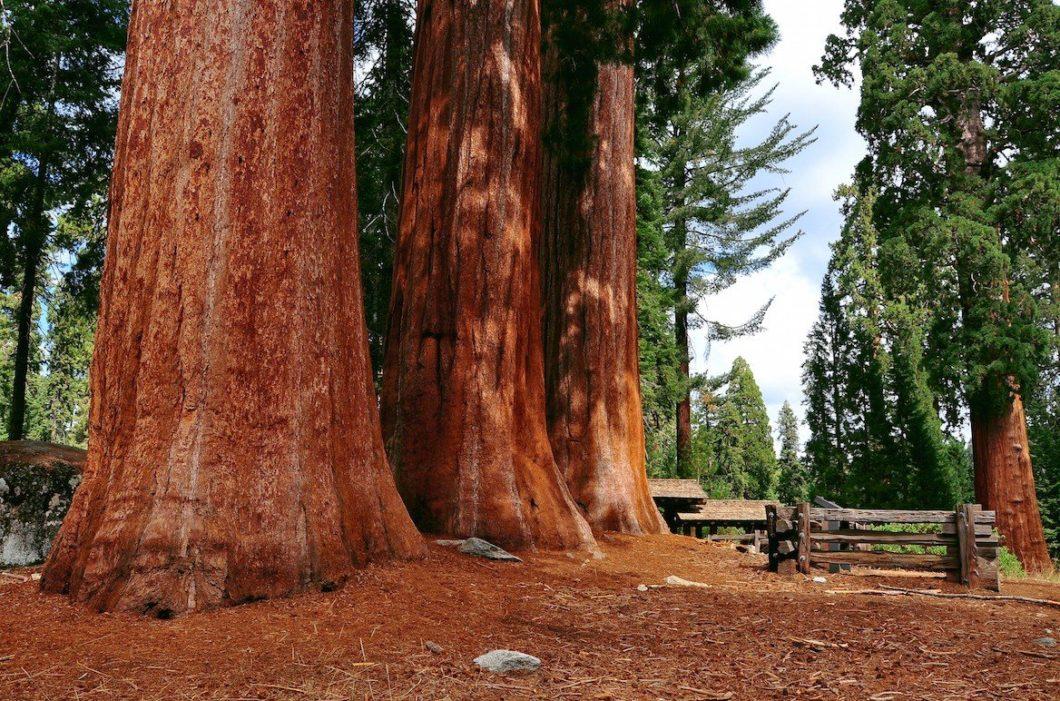 séquoia np