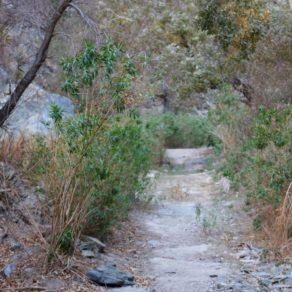 Végétation Darwin Falls