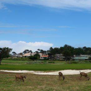 faune locale