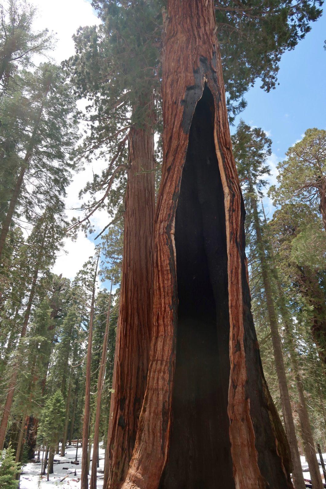 Séquoia Congress Trail