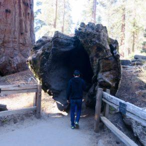Road Trip familial - Séquoia