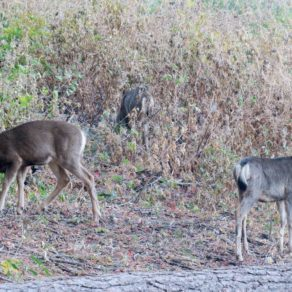 faune locale Mariposa Grove