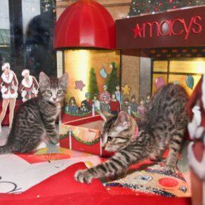 vitrine de Noël Macy's