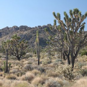 Mojave National Preserve