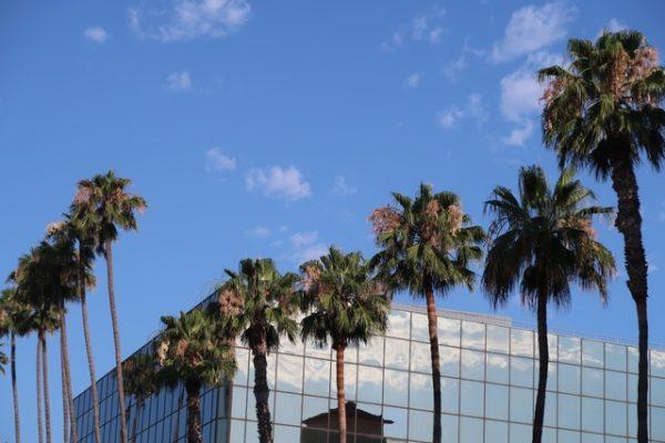 Palmiers à Hollywood Boulevard